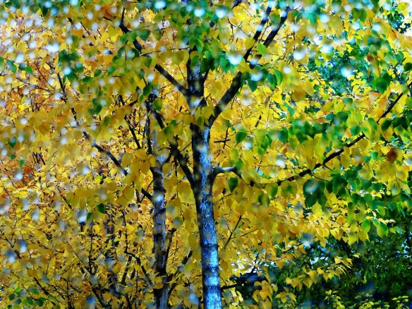 tree-1789602_1920